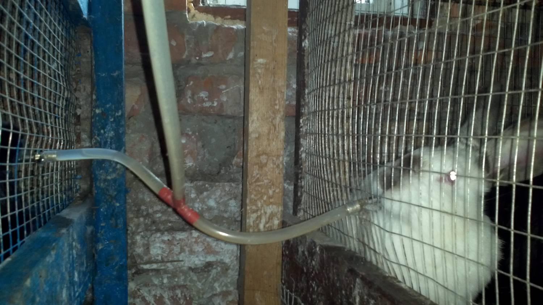 Как сделать поилку для кролика фото