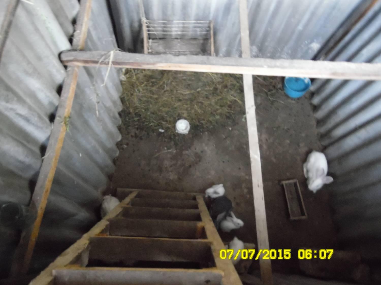 Выращивание кролей в яме 26