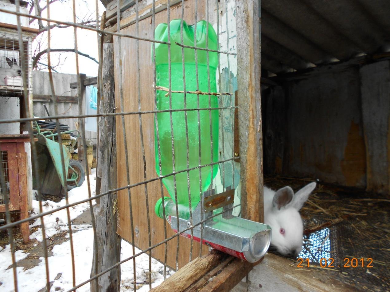 Как сделать поилки для кроликов своими руками фото