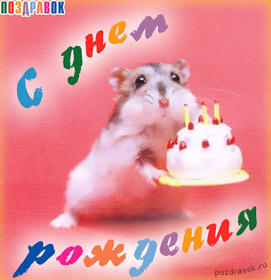 Открытки с хомяками с днем рождения