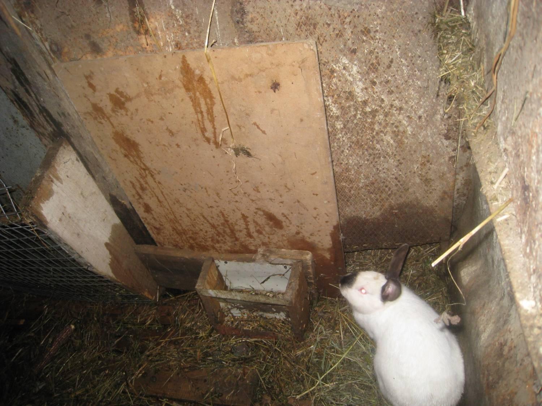 Выращивание кролей в яме 81