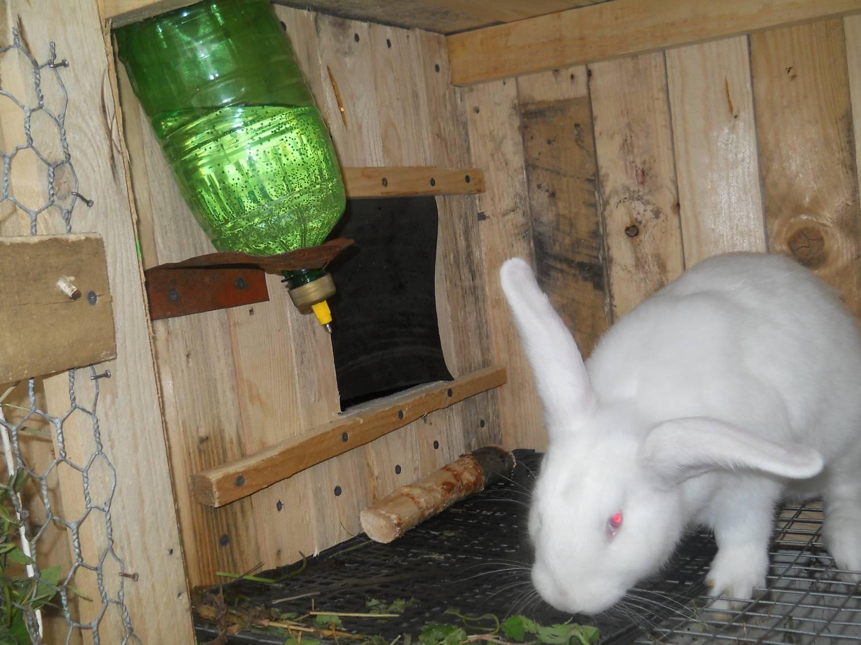 Как сделать кроликам поилки с фото