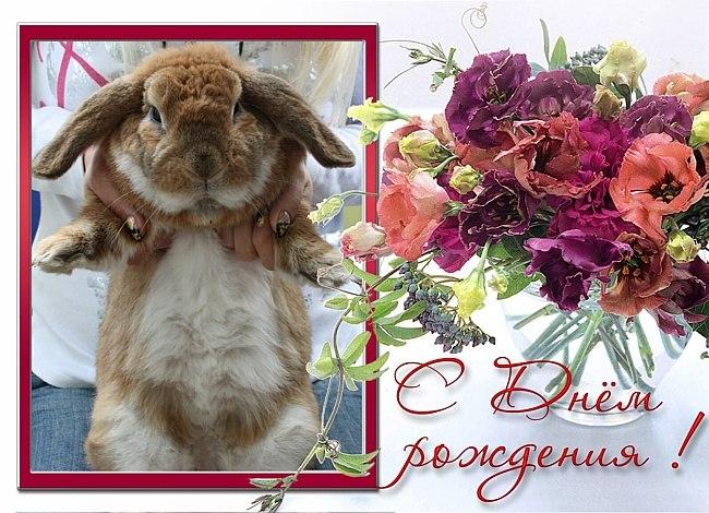 Поздравления с днем рождения открытки с кроликами