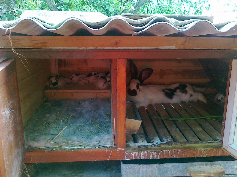 Клетка для крольчихи с маточником своими руками