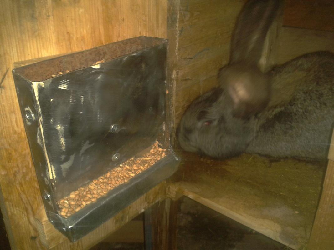 Кормушки для кроликов под зерно