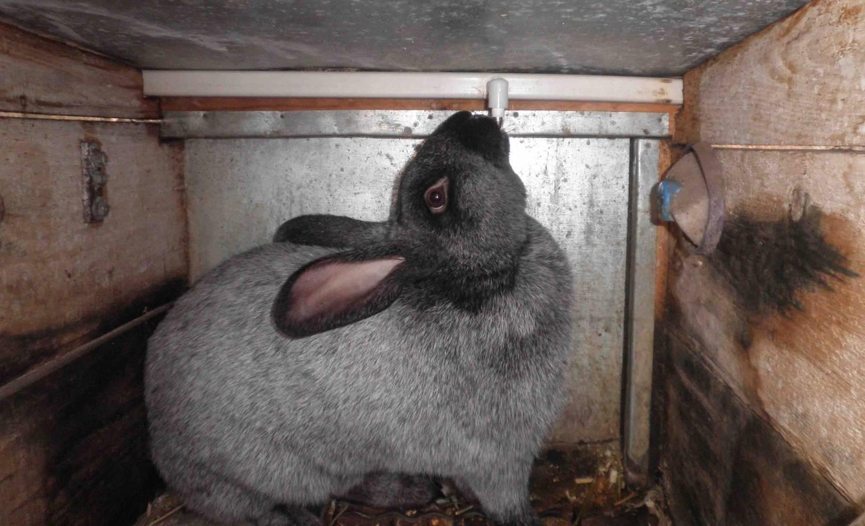 Как сделать автопоилку для кроликов. Кролики 71