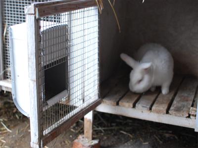 Кормушки под зерно для кроликов своими руками
