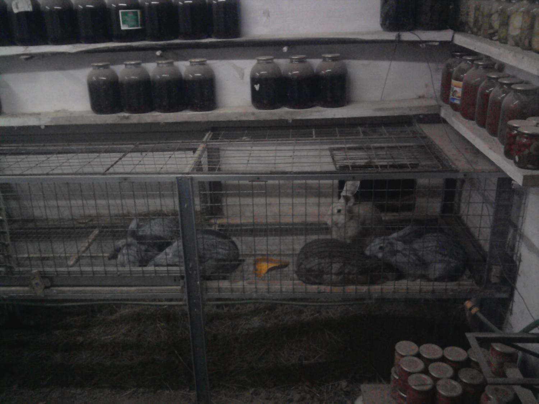 Выращивание кролей в яме 95
