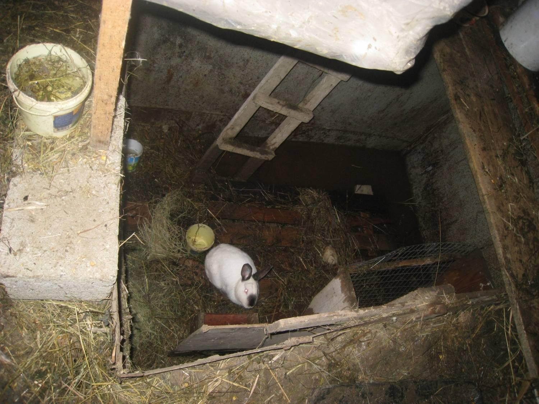 Яма для разведения кроликов