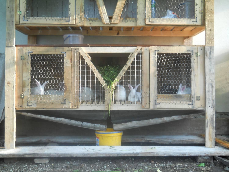 Сенник для кроликов своими руками фото оригинальные идеи