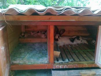 Задние Маточник для крольчихи своими руками