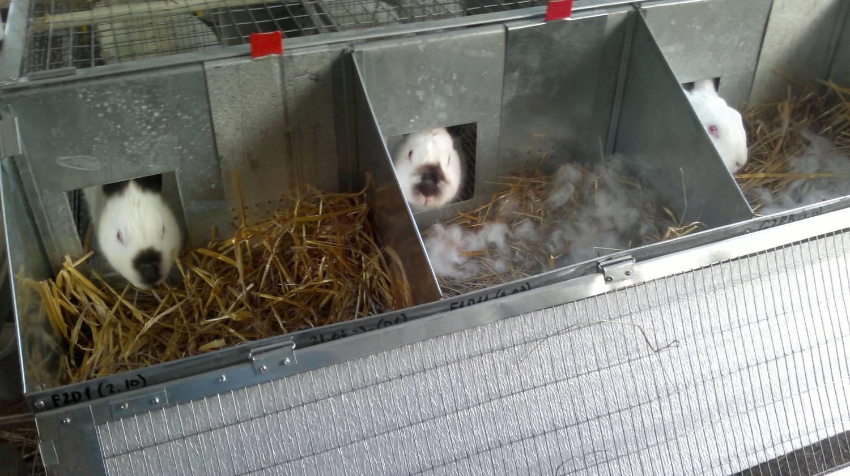 Клетки хорошие для кроликов