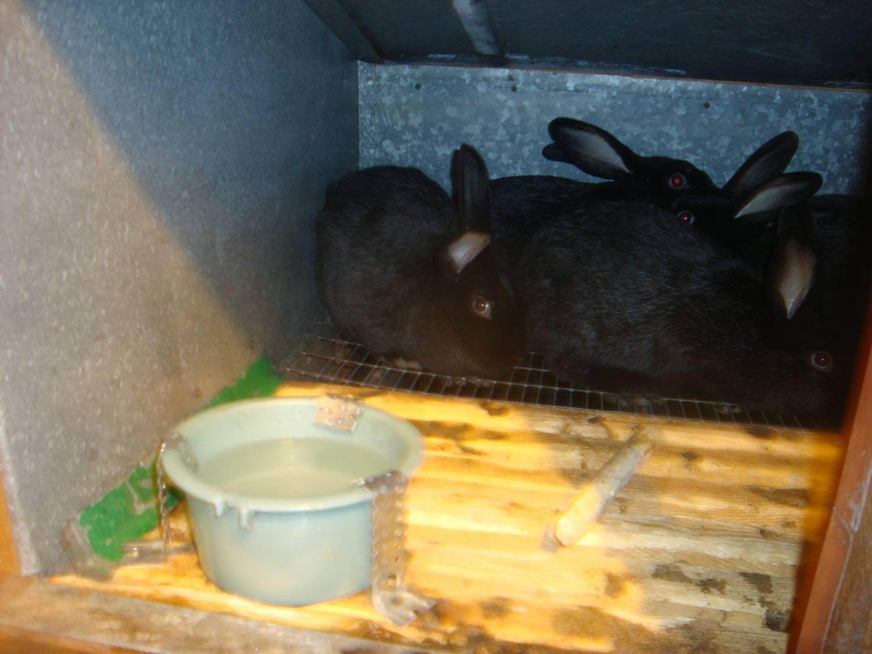 Как сделать поилки для кроликов своими руками из пластиковых