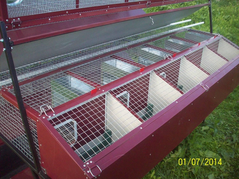Стоимость выращивания кроликов 19