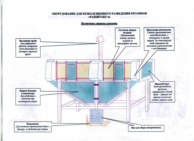 Схема строения клетки кроликов
