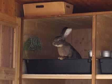 Кормушки для кроликов для сена своими руками оригинальные идеи