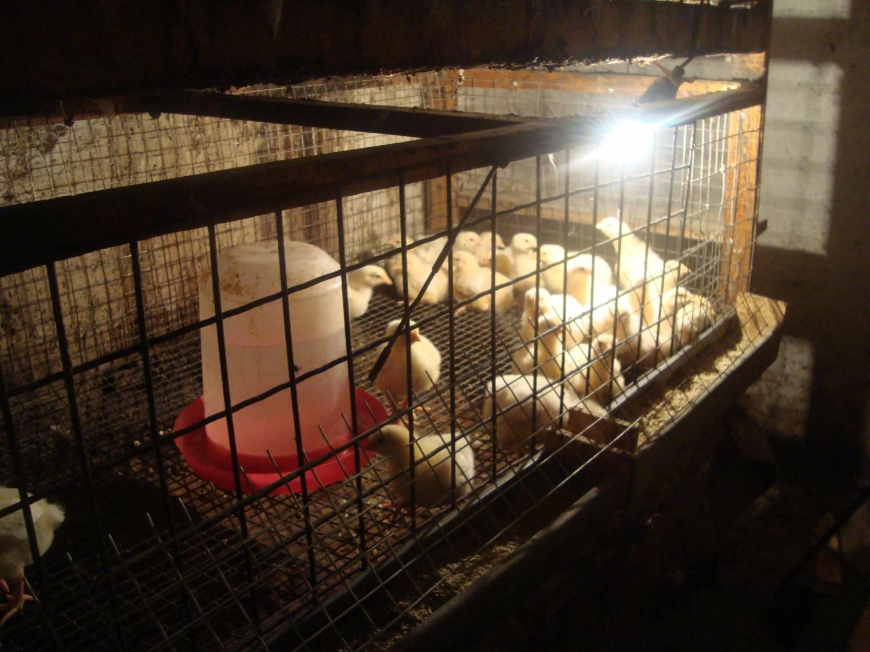 Стоимость выращивания кроликов 26